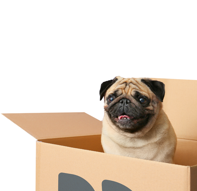 pug in a box 3