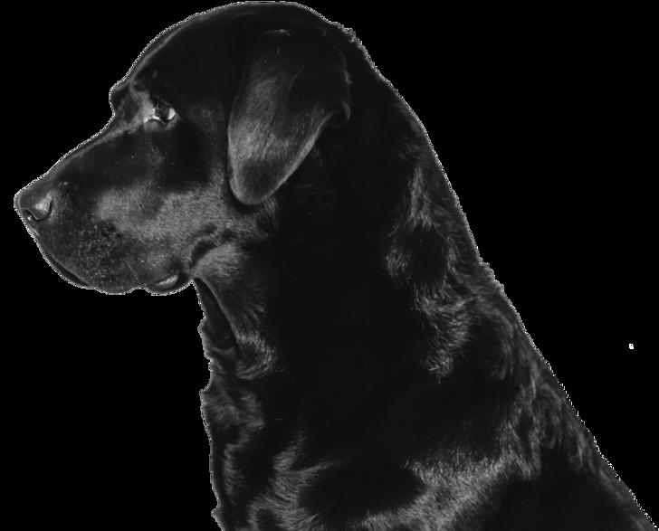 Black Dog - Nutritious Dog Food Company